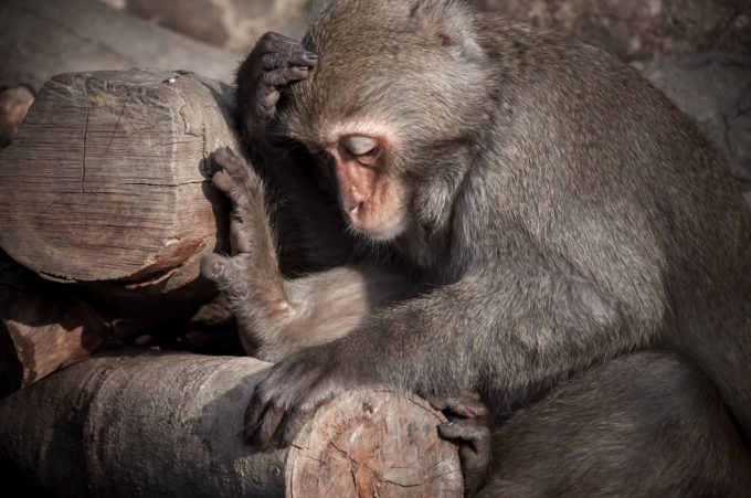 Da Ken Monkeys